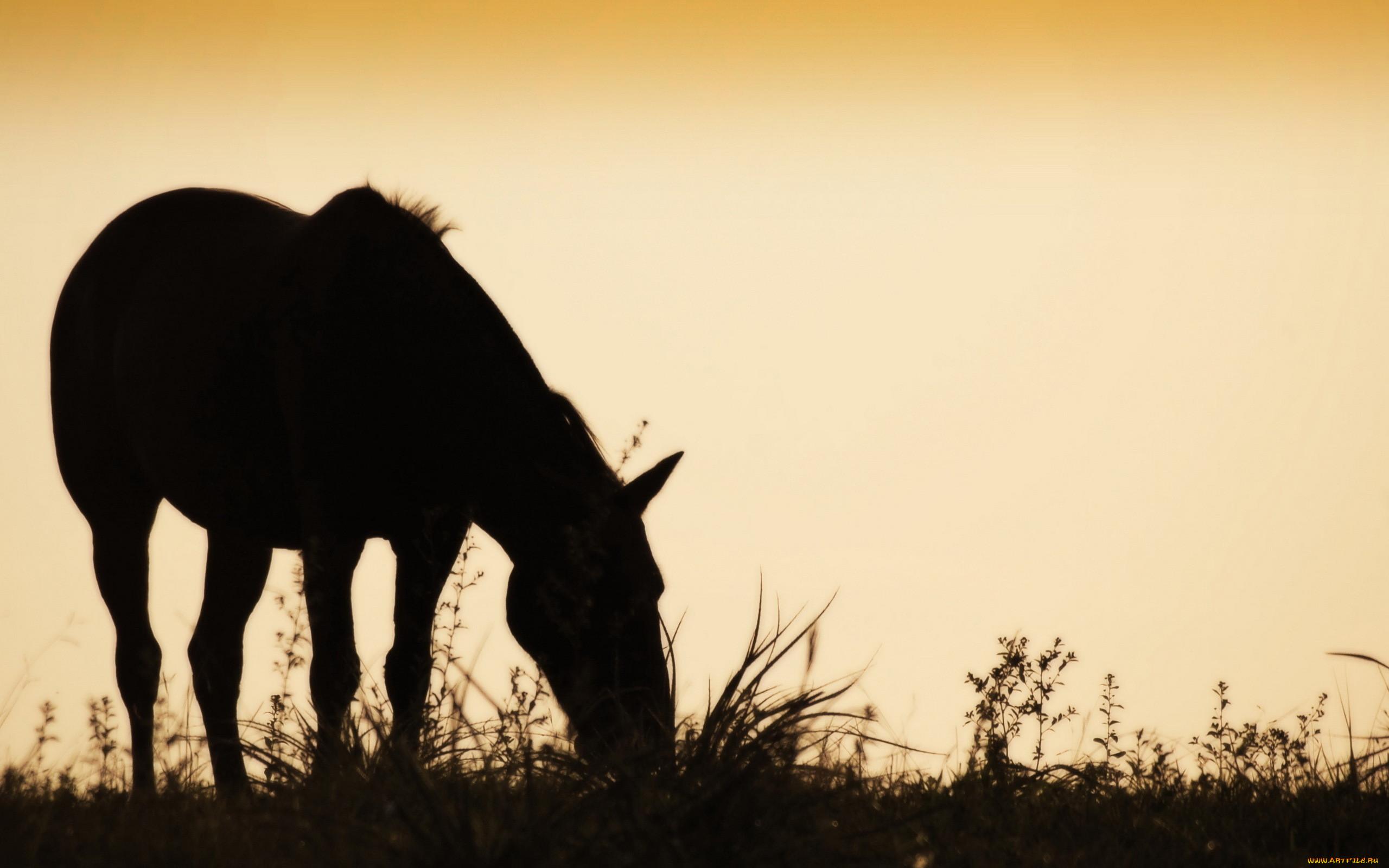 животные, лошади, силуэт, закат, конь